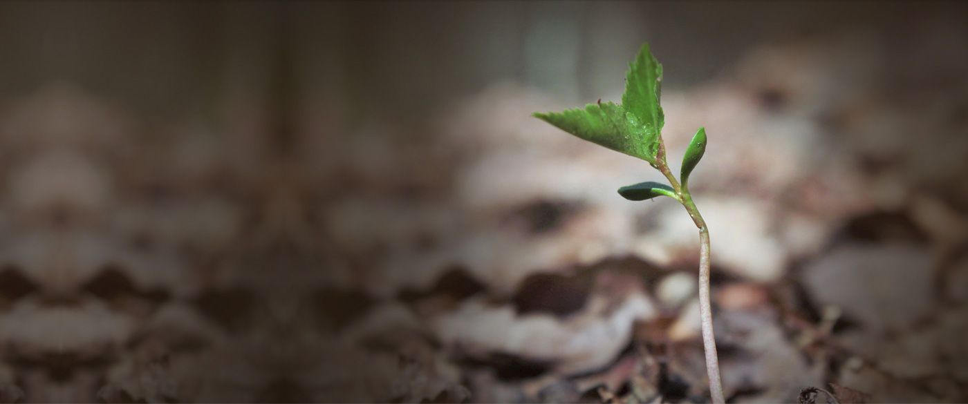 GO GREEN SAVE THE WORLD BY PLANTING TREE